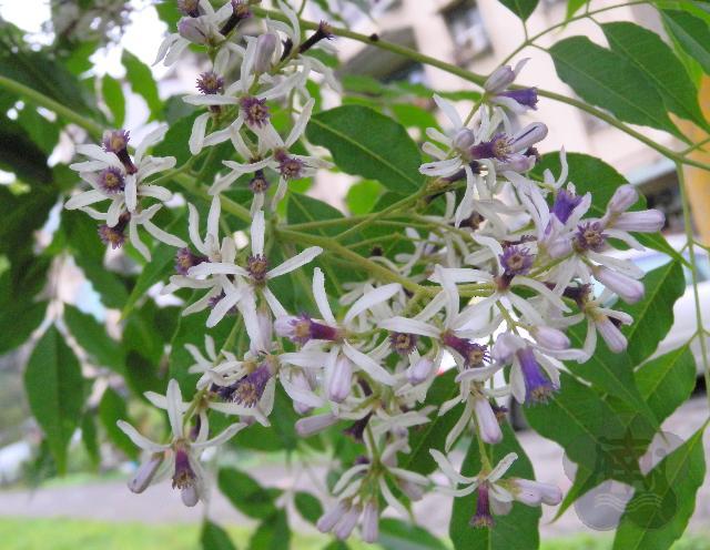 校园植物图库