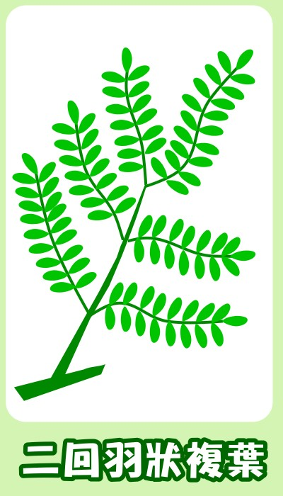 植物知多少
